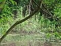 DSC02260 Teich zur Aufzucht autochthoner Fischarten.jpg