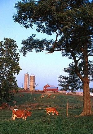 Dairy farm from http://www.ars.usda.gov/is/gra...