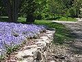 Dallas Arboretum BlueBonnet Path.JPG