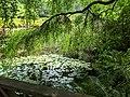Dandenong Ranges Botanic Garden.jpg