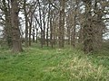 Day Hills Plantation - geograph.org.uk - 1254703.jpg
