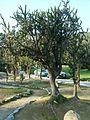 Day trip to the Botanical Gardens - panoramio (23).jpg