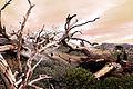Dead Wood (8025095336).jpg
