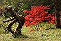 Dead yew tree - geograph.org.uk - 587597.jpg
