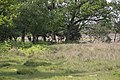 Deer lurking on the edge of Hincheslea Wood, New Forest - geograph.org.uk - 182387.jpg