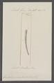 Dentalium acuticosta - - Print - Iconographia Zoologica - Special Collections University of Amsterdam - UBAINV0274 081 10 0031.tif
