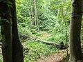 Der Mühlenbach im NSG Hellgrund 02.jpg