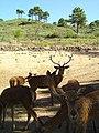 Desafio Volta ao Mundo - Parque Zoológico de Gouveia - Portugal (516077998).jpg