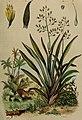 Dictionnaire pittoresque d'histoire naturelle et des phénomènes de la nature (1838) (14780840682).jpg