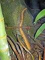 Diorama of a Pennsylanian forest floor - Euphoberia (45550796482).jpg