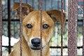 Dogs (25610217144).jpg