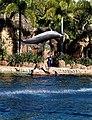 Dolphin Cove 03.jpg