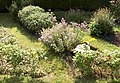 Domestic herbal patch rectangularpattern.JPG
