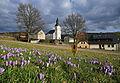 Drebacher Krokuswiesen- Frühling 2016 ..IMG 1698WI.JPG