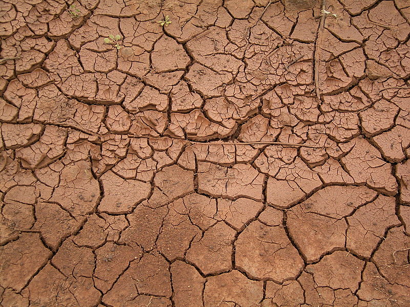 File:Dried mud (La Fajana) 03 ies.jpg