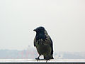 Duran kuş 3.JPG