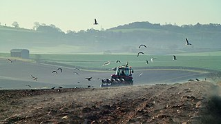 Early morning ploughing 4 (geograph 2869681).jpg