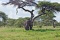 Eastern Serengeti 2012 05 31 2888 (7522634266).jpg