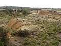 Edge of Holmsley Ridge gravel pit, New Forest - geograph.org.uk - 32758.jpg