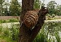 Eendenkorf. Locatie. de Buismans Einekoai Gytsjerk in provincie Friesland.jpg