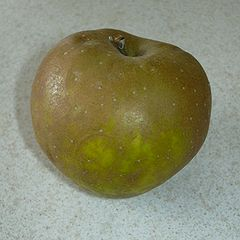 https://upload.wikimedia.org/wikipedia/commons/thumb/d/dc/Egremont_Russet_Apple.jpg/240px-Egremont_Russet_Apple.jpg