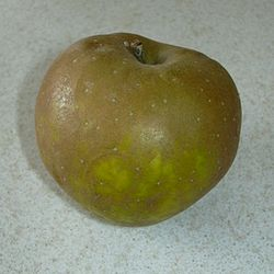 Egremont Russet Apple.jpg
