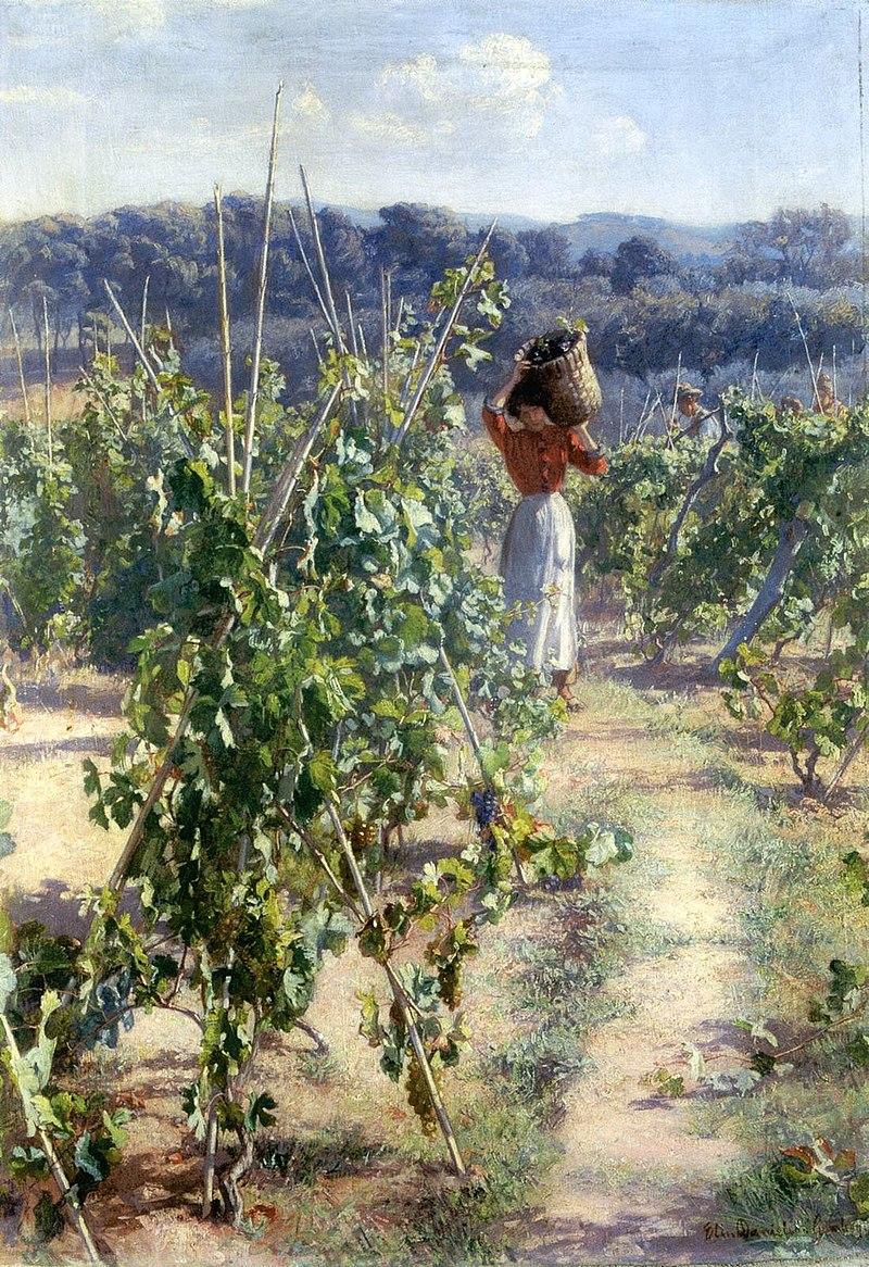 Elin Danielson-Gambogi - Grape Harvesting.jpg