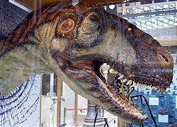 Rekonstrukce hlavy rodu Eustreptospondylus