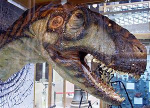Walking with Dinosaurs - Eustreptospondylus puppet head that was used in Walking with Dinosaurs at the Oxford University Museum of Natural History