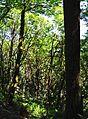 Evans Creek Preserve vertical pano 01 (rectangular crop) (27332643931).jpg