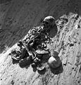 Excavations at Faras 022.jpg