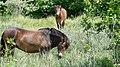 Exmoor in the woods.jpg