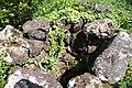 Fajã Rasa, poço de maré, Toledo, Velas, ilha de São Jorge, Açores.JPG