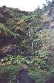 Fajã vasco martins reira com cascata exemplo de biodeversidade.jpg