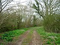 Farm Track, Willow Shaw - geograph.org.uk - 152370.jpg