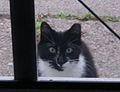 Feral cat.jpg