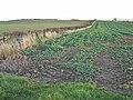 Field near Dalton Piercy - geograph.org.uk - 279181.jpg