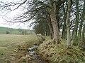 Field near Yorkston - geograph.org.uk - 159127.jpg