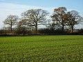 Field south of Long Wood - geograph.org.uk - 1608598.jpg