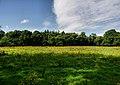 Fields, Pylewell Home Farm - geograph.org.uk - 1431773.jpg