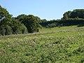 Fields below Axminster Road - geograph.org.uk - 333610.jpg