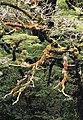 Fiordland N.P. 17.jpg