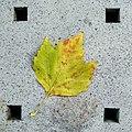 Five squares and a leaf - Flickr - Stiller Beobachter.jpg