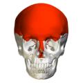 Flat bones in skull - anterior view.png