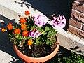 Fleurs (2139756502).jpg