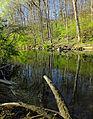 Flickr - Nicholas T - Pool Wildlife Sanctuary (3).jpg