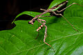 Flickr - ggallice - Mantis.jpg