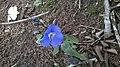 Flor de uma Planta, encontrada em alguns períodos na Mata Cipó Derivação da Mata Atlântica-Ba;.jpg