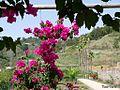 Flores colgando - panoramio.jpg