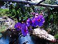 Flores e Rio (Cachoeira Rabo de Cavalo).jpg